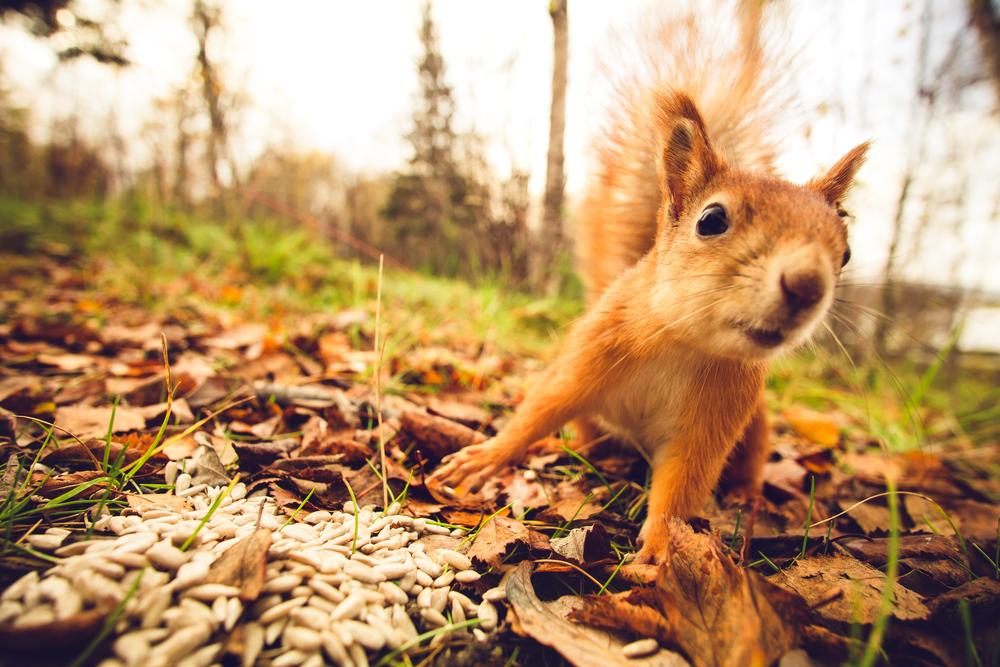 Voorkeur Dieren die vrolijk worden van de herfst | 10 x leuke dierenplaatjes #EV68