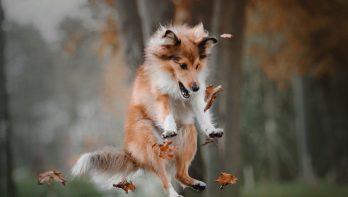 Dieren die vrolijk worden van de herfst