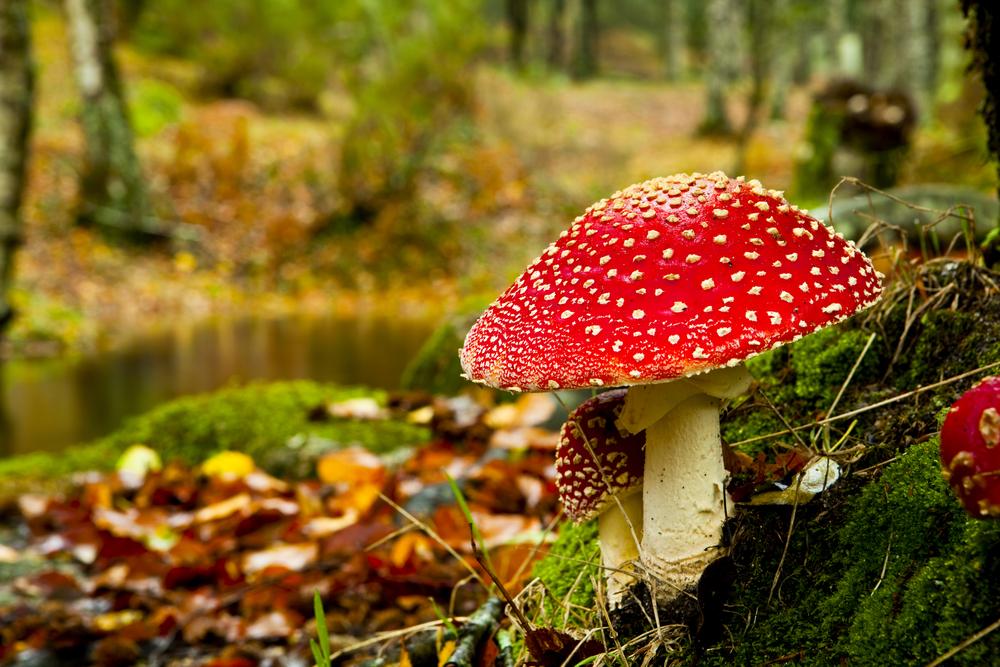 Herfstfoto - paddenstoelen