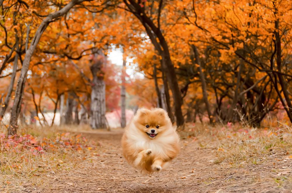 dieren in de herfst