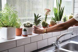 Prick: vetplanten en cactussen