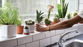 Cactussen en vetplanten: waarom ze zo populair zijn