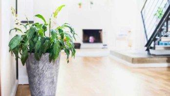 10 luchtzuiverende planten
