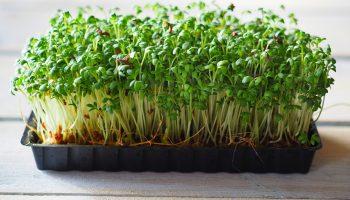 tuinkers kweken