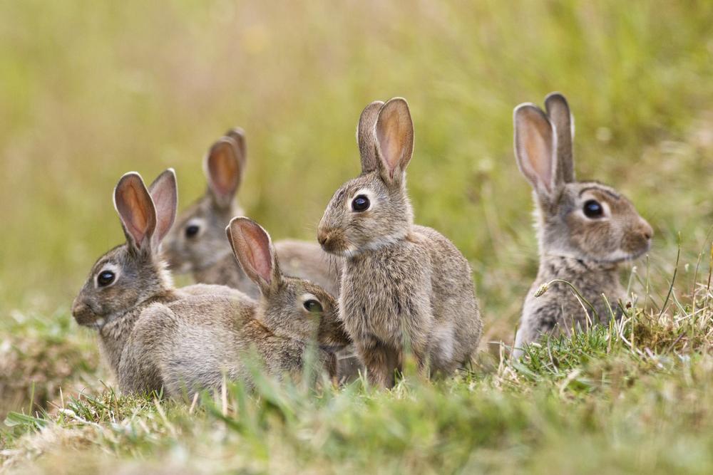 groep konijnen februari