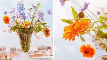 Hitteplan voor bloemen: zo bescherm je ze tegen de warmte