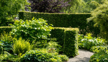 Groene hagen in de tuin