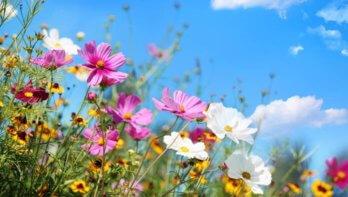 Zo kan de tuin je helpen tijdens deze crisis