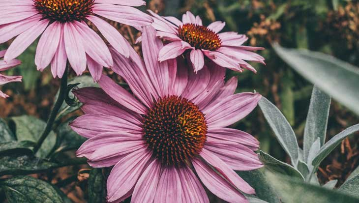 Jouw tuin, bron van groei