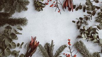 5x geschikte planten voor kerstdecoraties