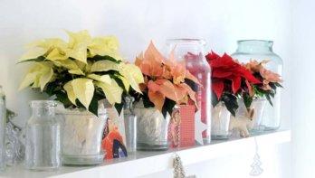 5x bijzondere planten voor kerst
