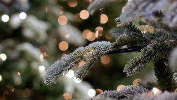 QUIZ: Welke kerstboom past bij jou?